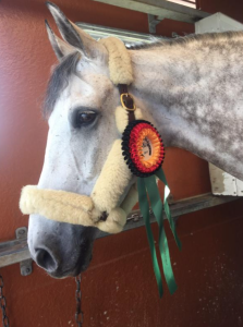 "Cooley On Show, ""Louie"", showing off his 4* ribbon!"